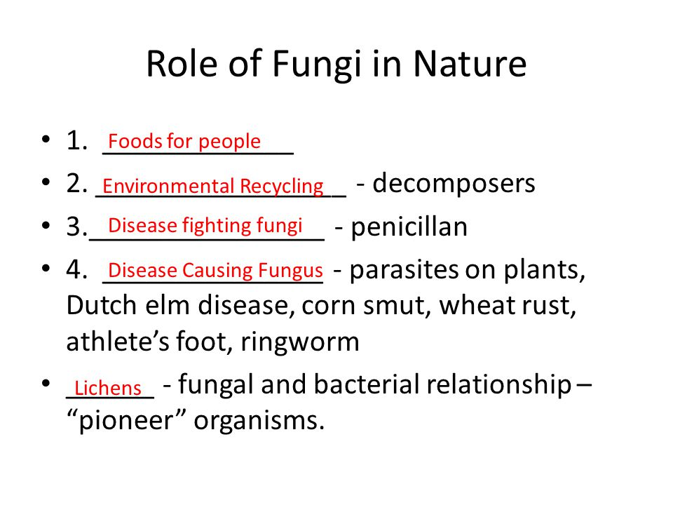 Role of Fungi in Nature 1. _____________