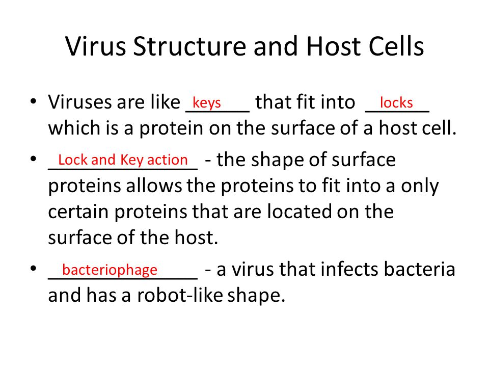 Virus Structure and Host Cells