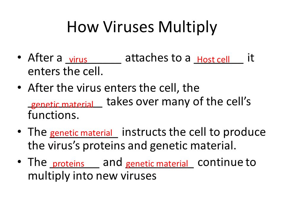 How Viruses Multiply After a _________ attaches to a ________ it enters the cell.