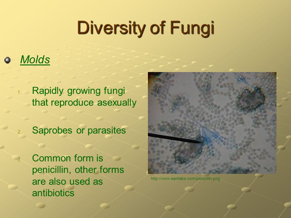 Diversity of Fungi Molds