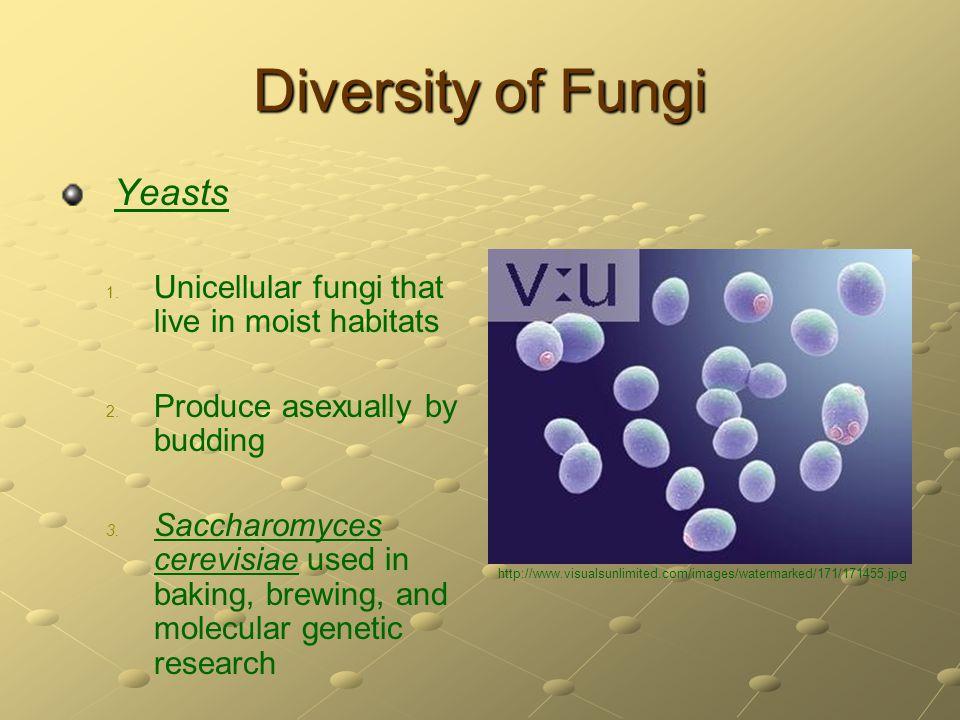 Diversity of Fungi Yeasts