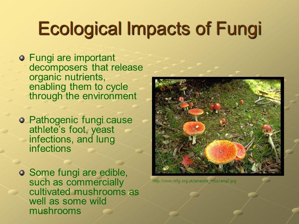Ecological Impacts of Fungi