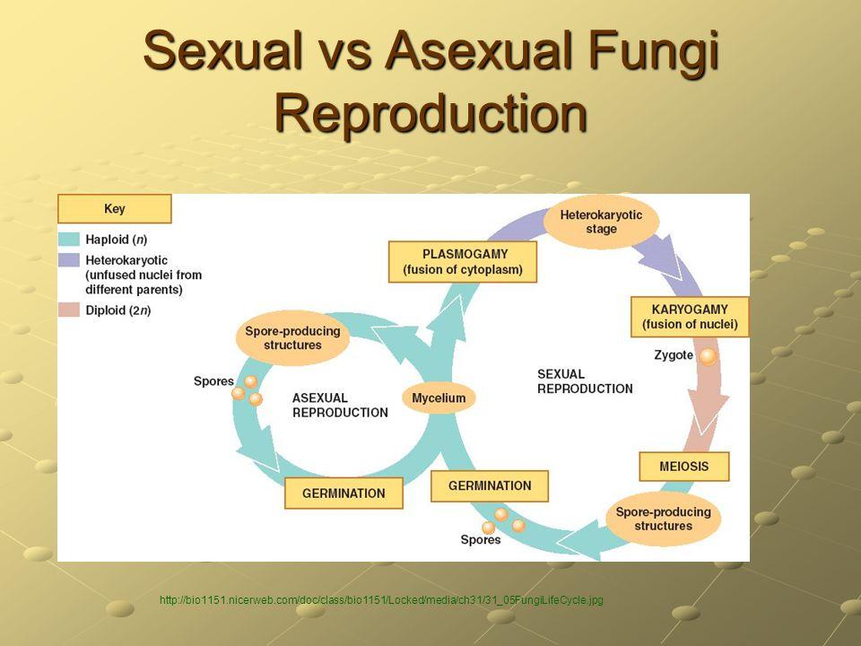 Sexual vs Asexual Fungi Reproduction