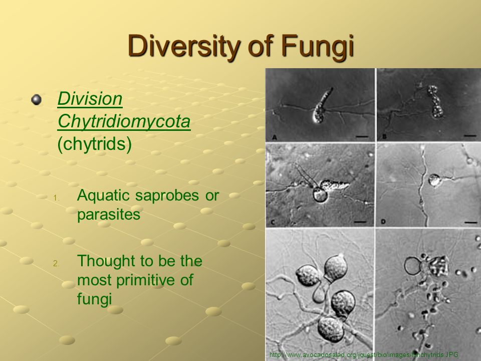 diversity of life fungi Fungi - life support for ecosystems  and management of the fungal diversity fungi are perhaps the  fungi - would we be here without them from.