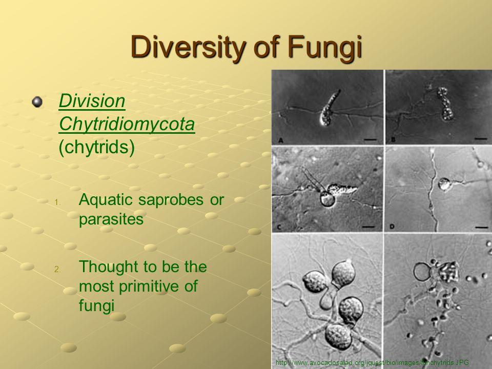 Diversity of Fungi Division Chytridiomycota (chytrids)