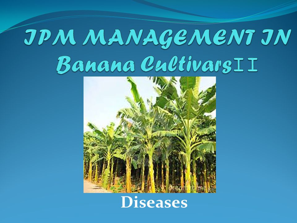 IPM MANAGEMENT IN Banana CultivarsII