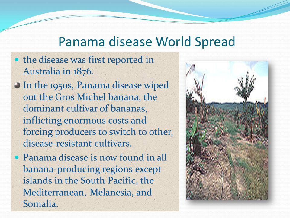 Panama disease World Spread
