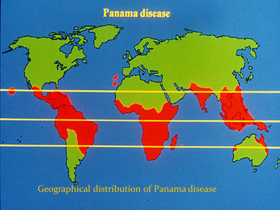 Geographical distribution of Panama disease