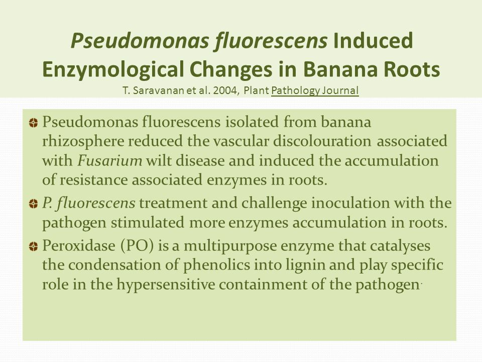 Pseudomonas fluorescens Induced Enzymological Changes in Banana Roots T. Saravanan et al. 2004, Plant Pathology Journal