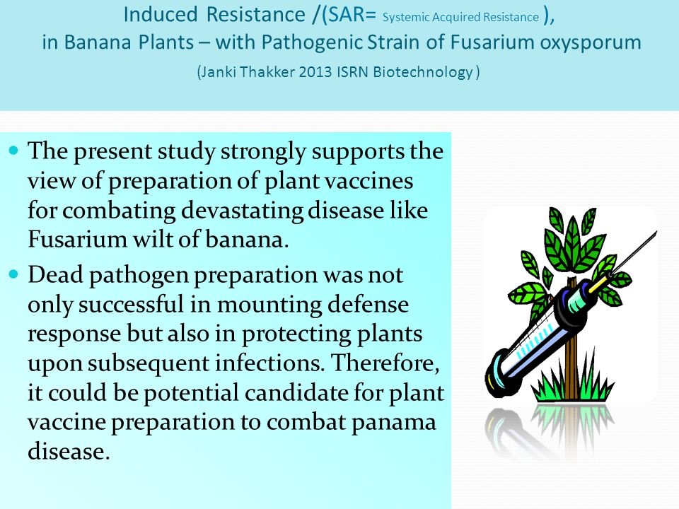 Induced Resistance /(SAR= Systemic Acquired Resistance ), in Banana Plants – with Pathogenic Strain of Fusarium oxysporum (Janki Thakker 2013 ISRN Biotechnology )