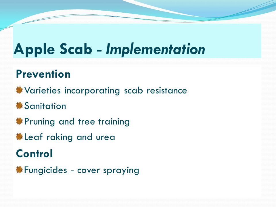 Apple Scab - Implementation