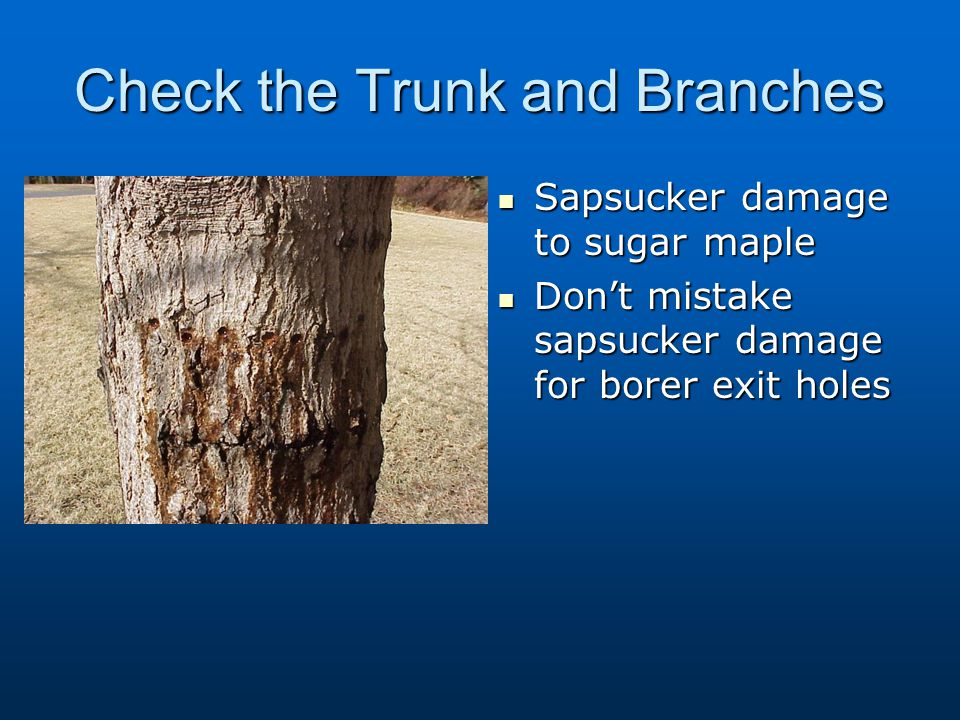 Check the Trunk and Branches