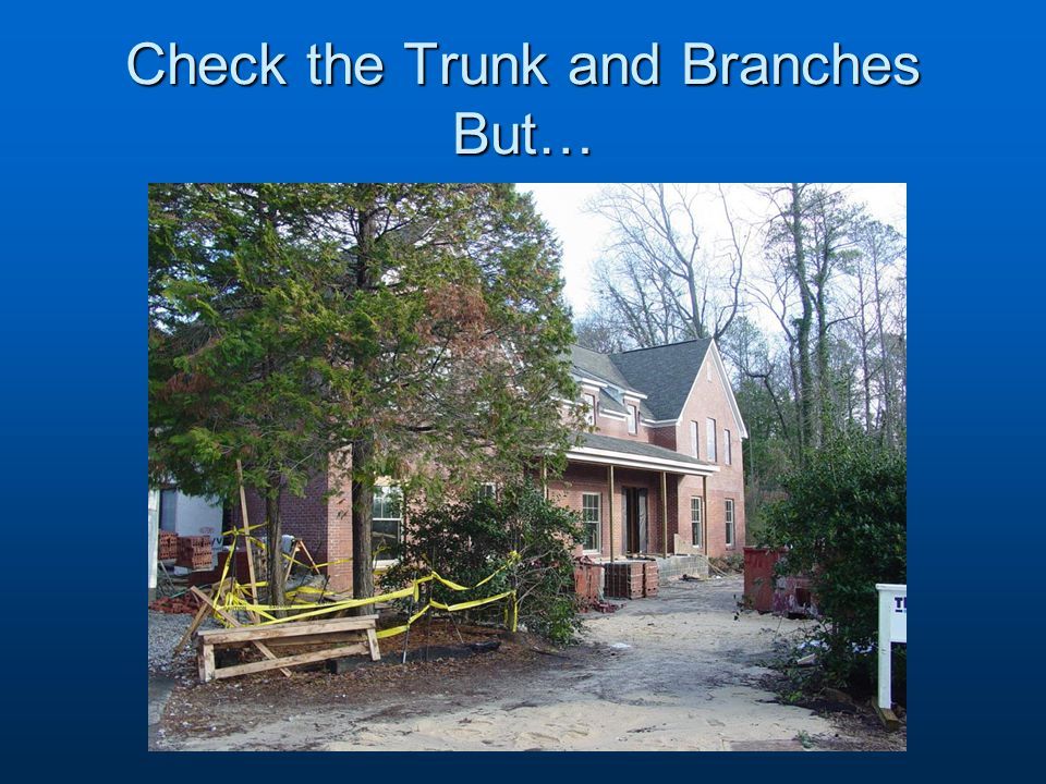 Check the Trunk and Branches But…