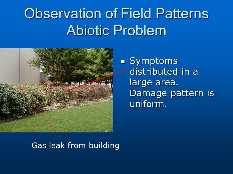 Observation of Field Patterns Abiotic Problem