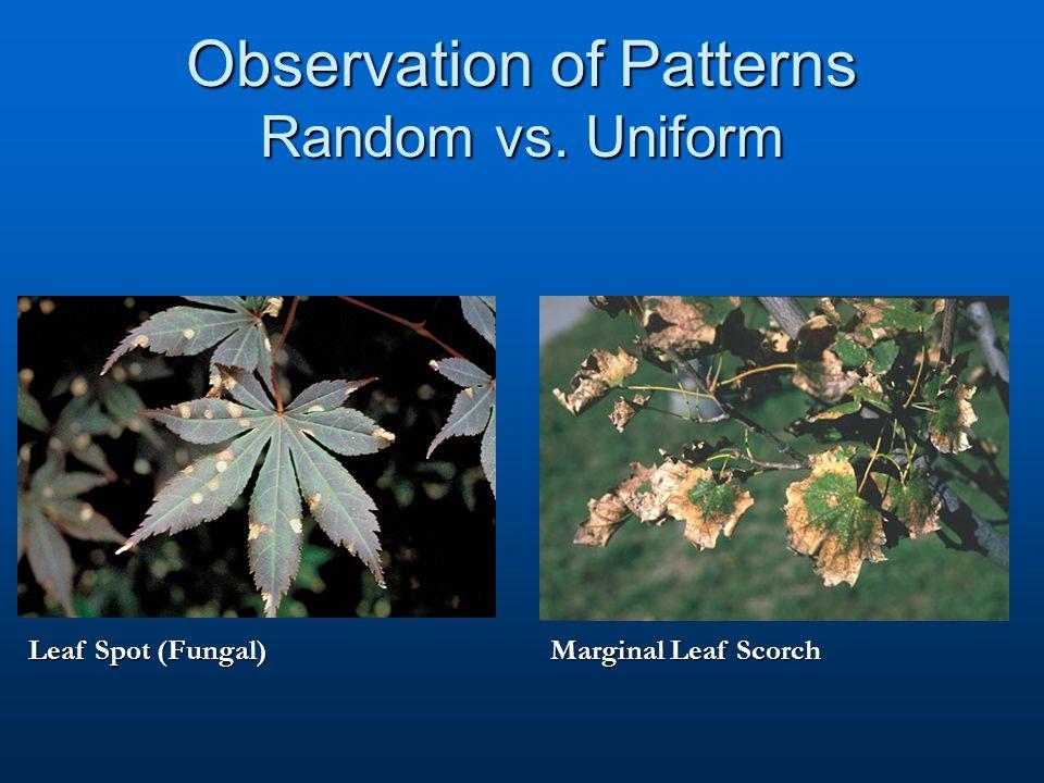 Observation of Patterns Random vs. Uniform