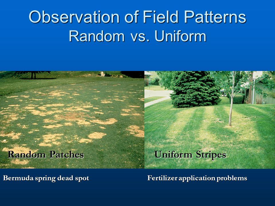 Observation of Field Patterns Random vs. Uniform