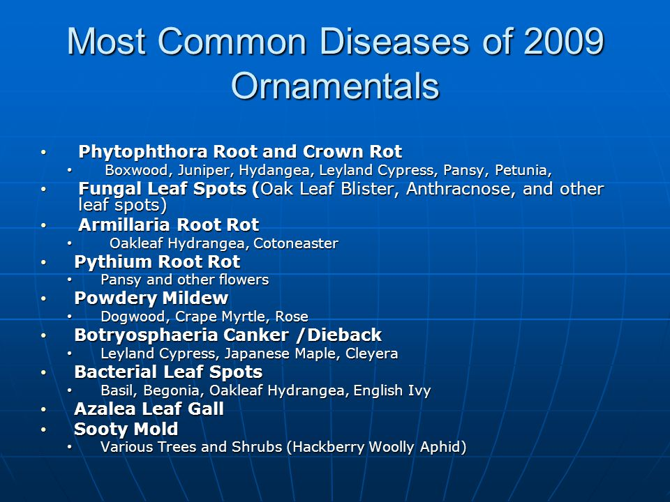 Most Common Diseases of 2009 Ornamentals