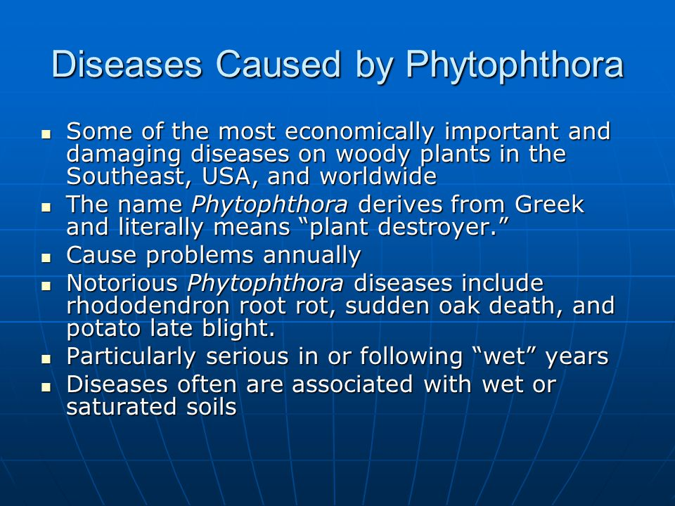 Diseases Caused by Phytophthora