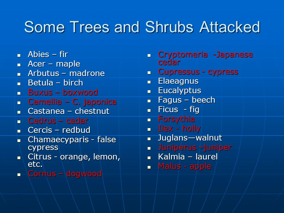 Some Trees and Shrubs Attacked