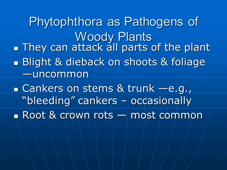 Phytophthora as Pathogens of Woody Plants