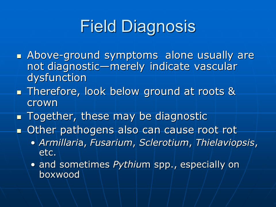 Field Diagnosis Above-ground symptoms alone usually are not diagnostic—merely indicate vascular dysfunction.