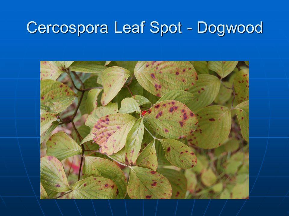 Cercospora Leaf Spot - Dogwood