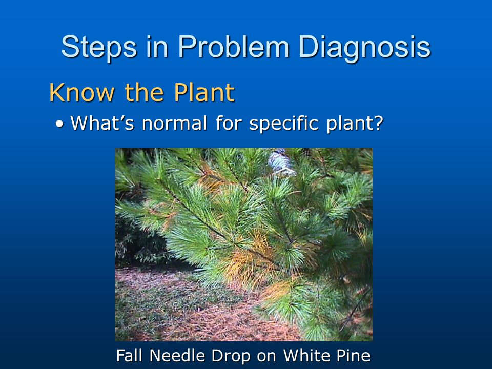 Steps in Problem Diagnosis