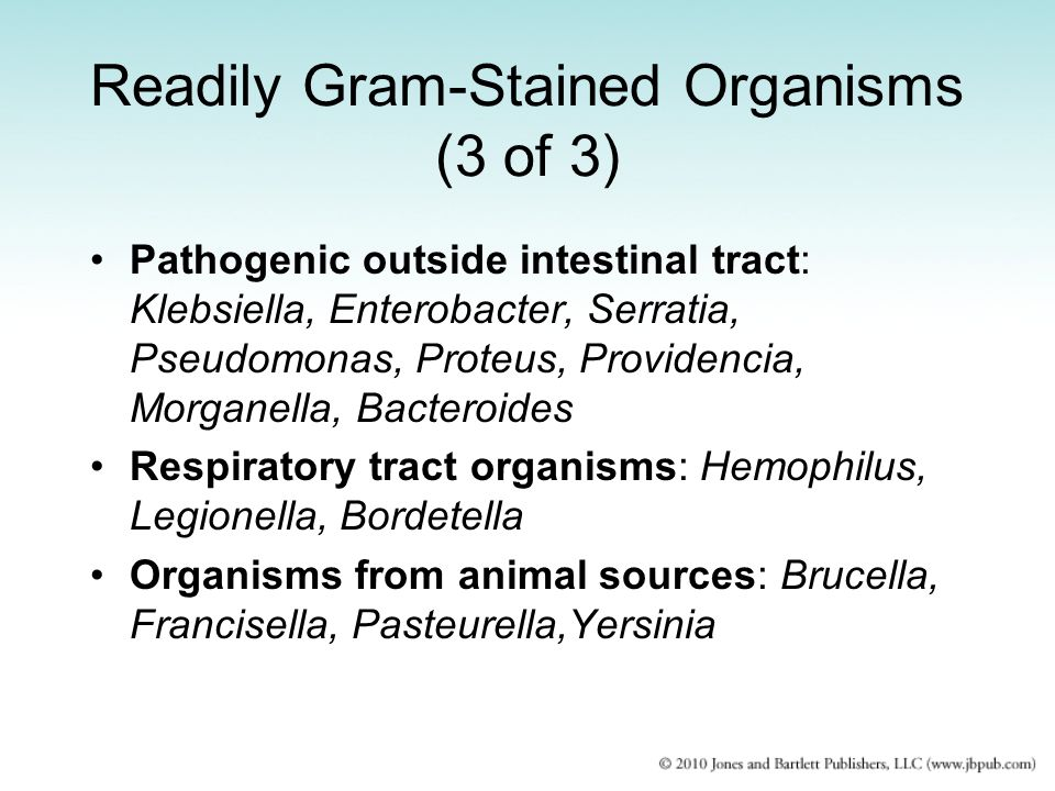 Readily Gram-Stained Organisms (3 of 3)