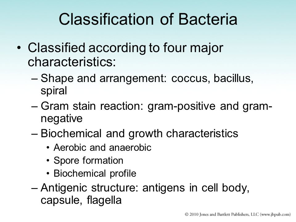 bacteria lower classifications