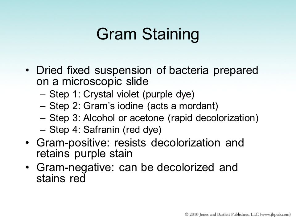 Gram Staining Dried fixed suspension of bacteria prepared on a microscopic slide. Step 1: Crystal violet (purple dye)