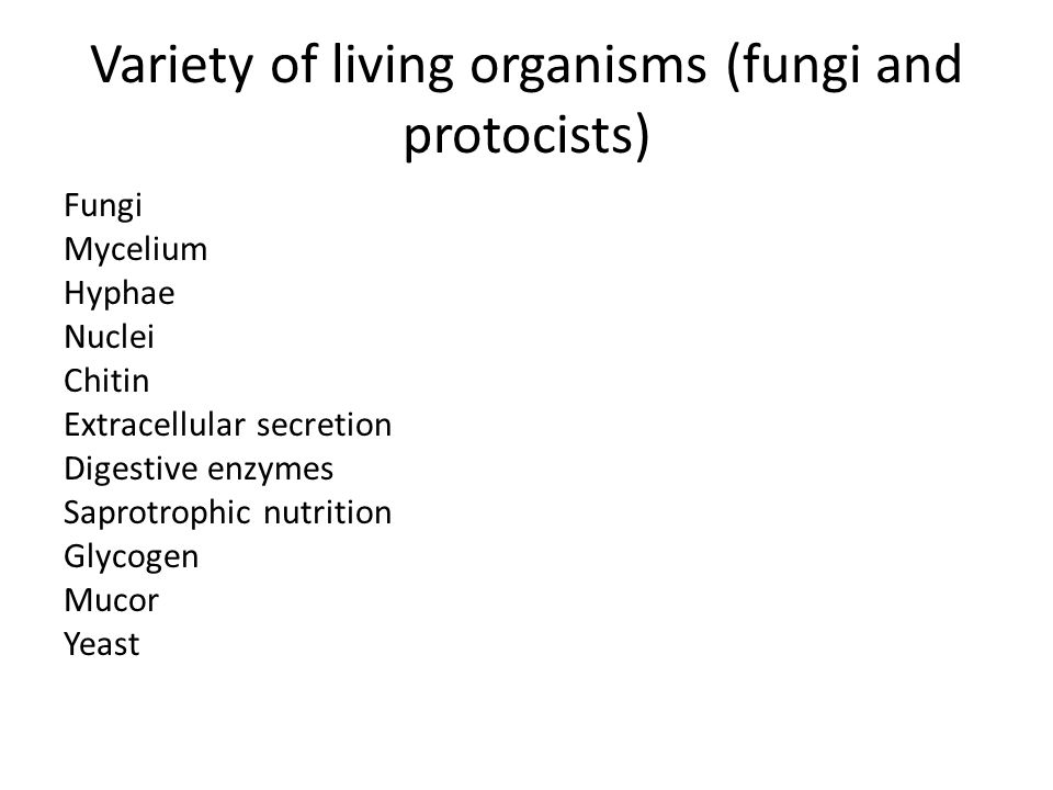 Variety of living organisms (fungi and protocists)