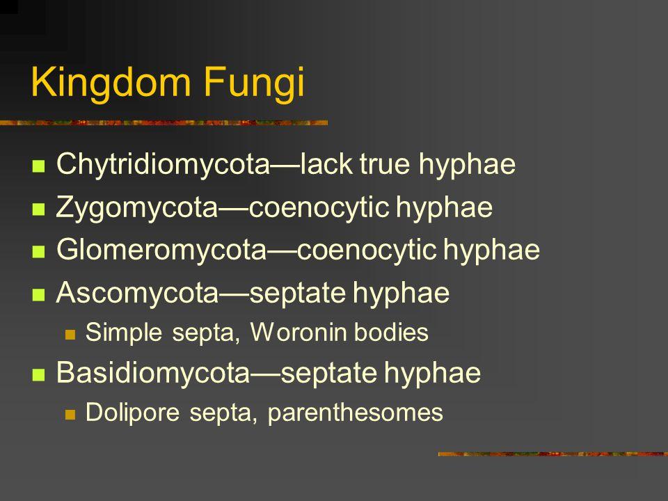 Kingdom Fungi Chytridiomycota—lack true hyphae