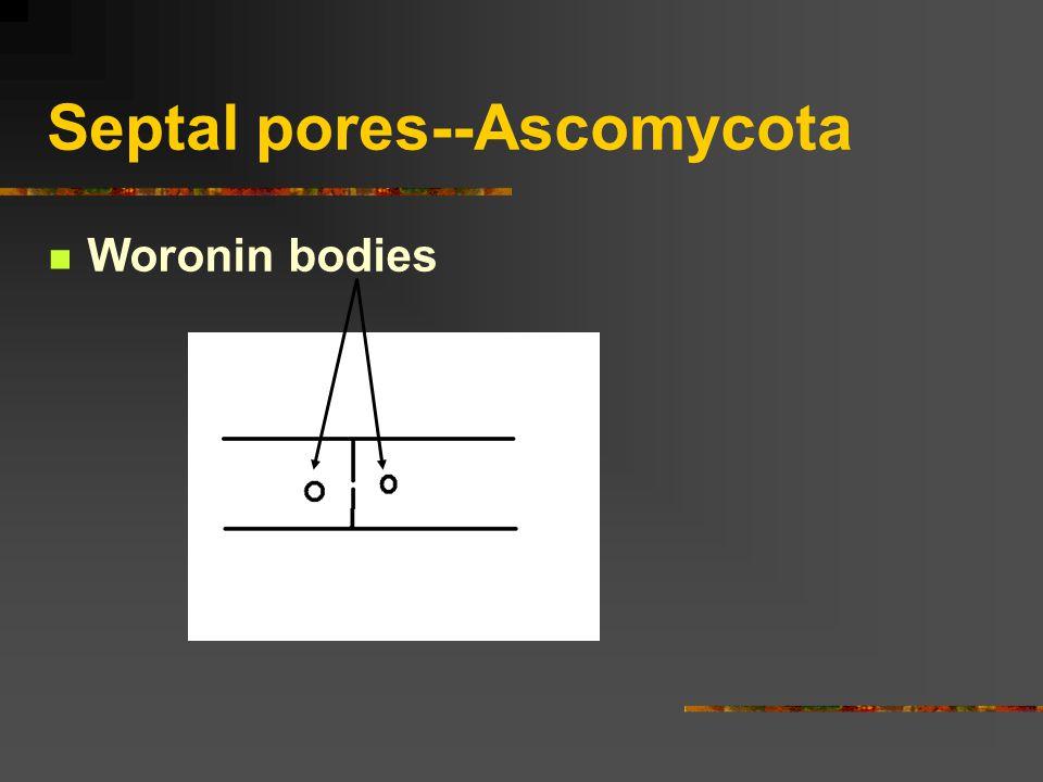 Septal pores--Ascomycota