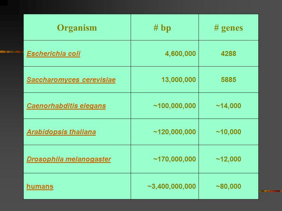 Organism # bp # genes Escherichia coli 4,600,000 4288
