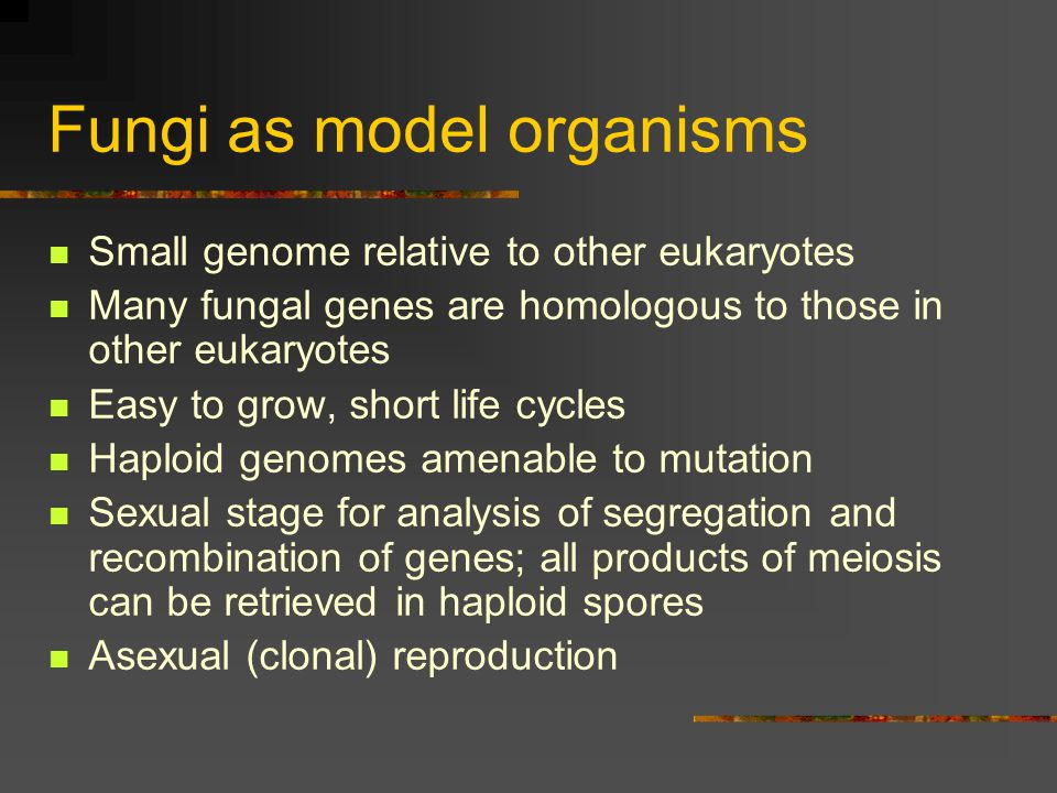 Fungi as model organisms