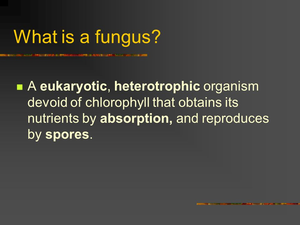 What is a fungus.