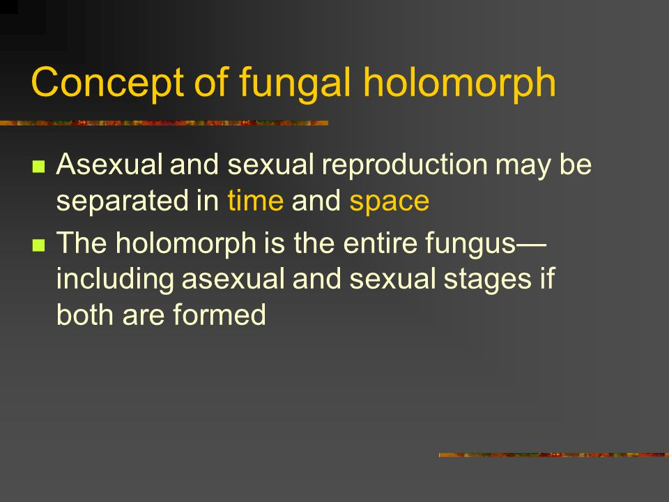 Concept of fungal holomorph