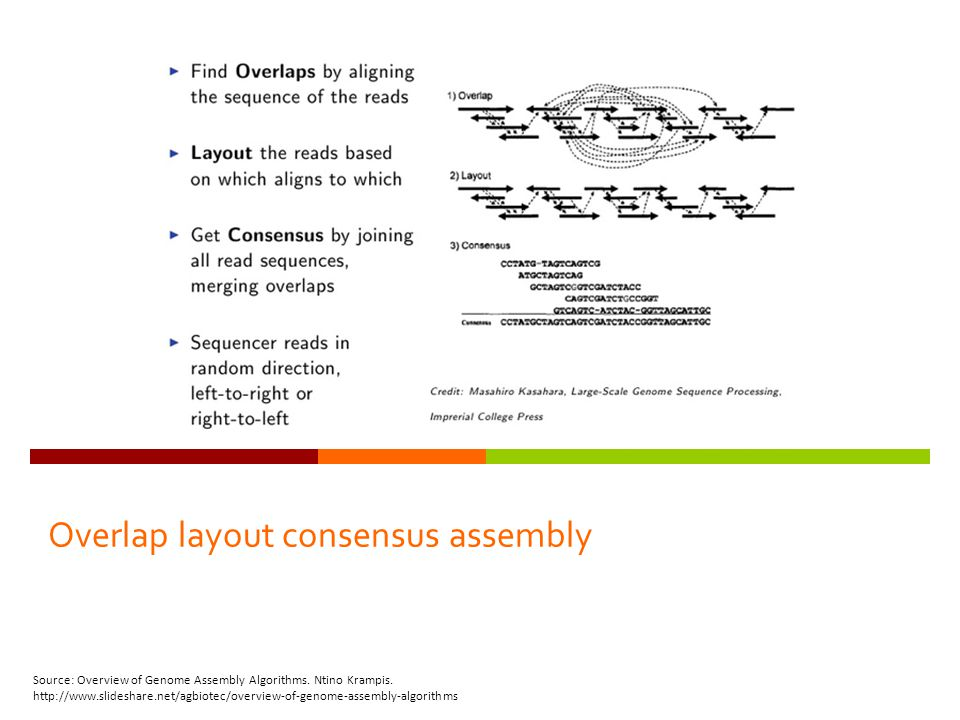 Overlap layout consensus assembly