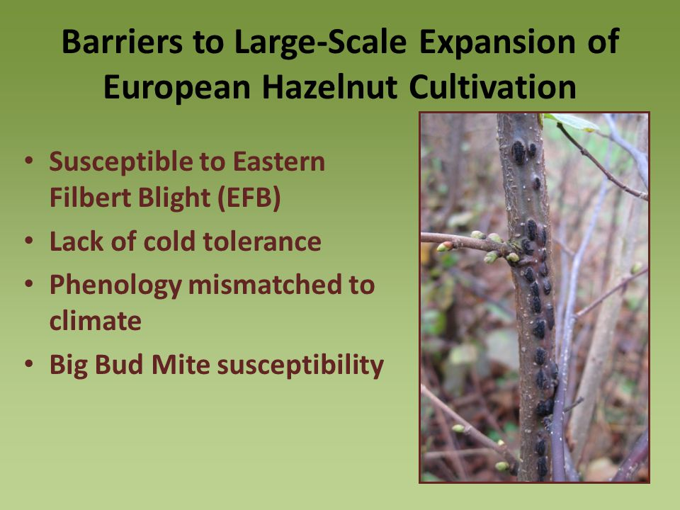 Barriers to Large-Scale Expansion of European Hazelnut Cultivation