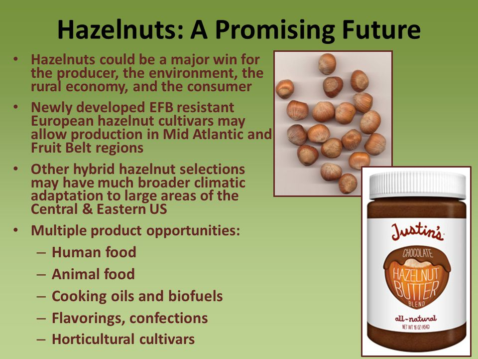 Hazelnuts: A Promising Future