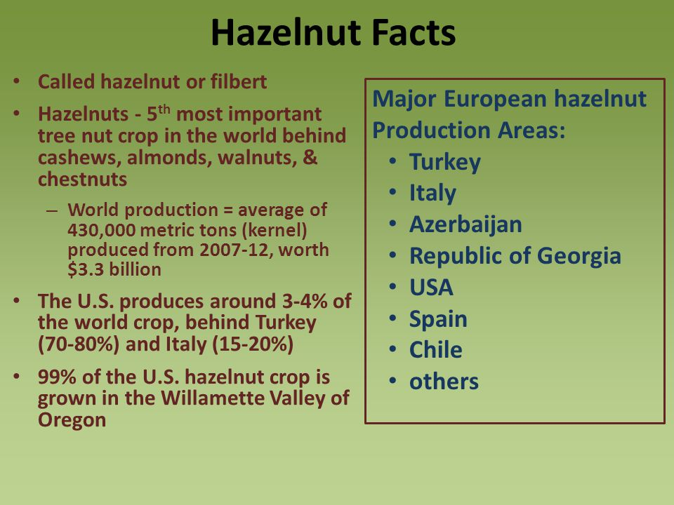 Hazelnut Facts Major European hazelnut Production Areas: Turkey Italy