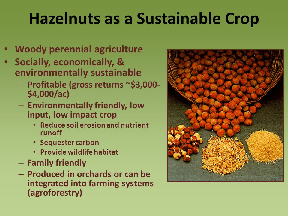 Hazelnuts as a Sustainable Crop