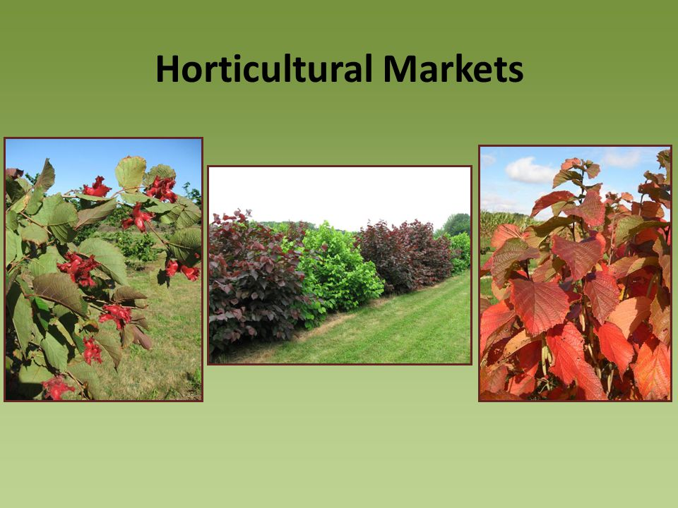 Horticultural Markets