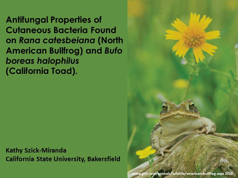 www.grit.com/animals/wildlife/american-bullfrog.aspx 2010