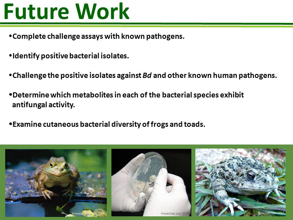 Future Work Complete challenge assays with known pathogens.
