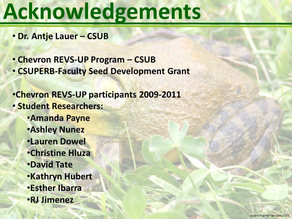Acknowledgements Dr. Antje Lauer – CSUB Chevron REVS-UP Program – CSUB