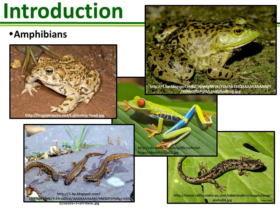 Introduction Amphibians