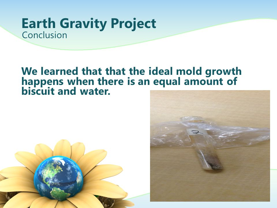 Earth Gravity Project Conclusion. We learned that that the ideal mold growth happens when there is an equal amount of biscuit and water.