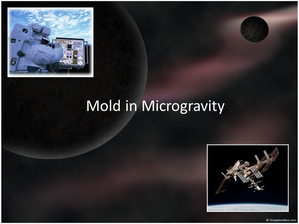 Mold in Microgravity Brianna: So now our question is, How will mold grow in microgravity