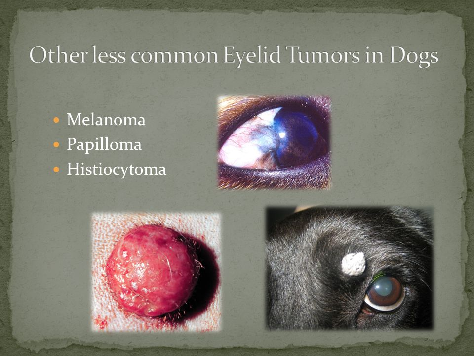 Other less common Eyelid Tumors in Dogs
